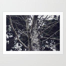 Grace Beneath The Pines II Art Print