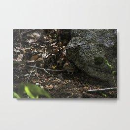 chipmunk playing hide and seek Metal Print