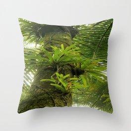 Bromeliads up a Sierra Palm in El Yunque rainforest PR Throw Pillow