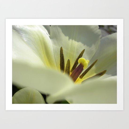 spring tulip macro XXV Art Print