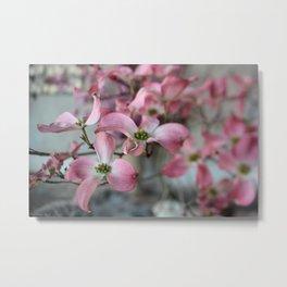 pink dogwood #3 Metal Print