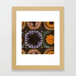 Lirellate Composition Flower  ID:16165-040917-91120 Framed Art Print
