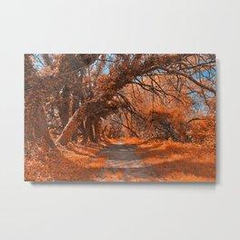 Wye Island Amber Trail Metal Print