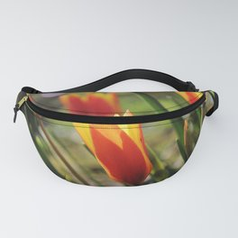 Windy Day Tulips Fanny Pack