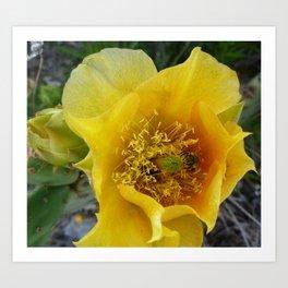 Cactus Flower with Bee Art Print