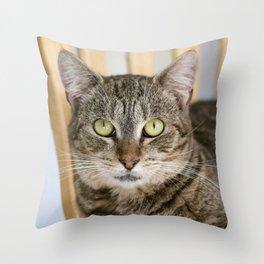 Rescue Cat Throw Pillow