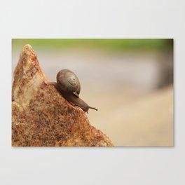 Snail Mountain Canvas Print
