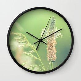 Ribwort Plantain Weeds // Flowers Wall Clock