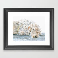 Sleeping Labradoodle Framed Art Print
