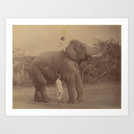 The Great Elephant Saluting - Vintage Indian Photography Art Print