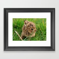 Leveret In The Grass Framed Art Print