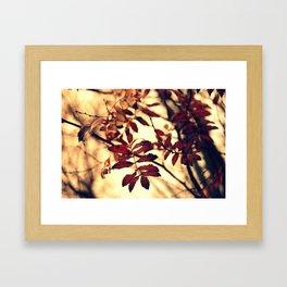 The Rowan Framed Art Print