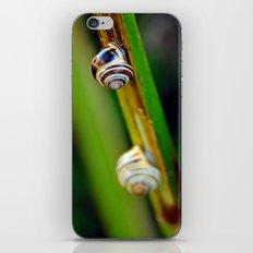 Climbing Up the Stalk iPhone & iPod Skin
