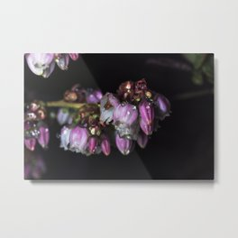 Blueberry blossom rain drops Metal Print