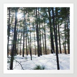 Winter Woods1 Art Print