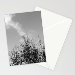 Hummingbird Perched on California Interior Live Oak Stationery Cards