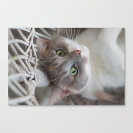 Dilute Calico of the Cute Variety Canvas Print