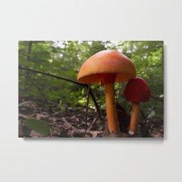 Two Mushrooms Metal Print