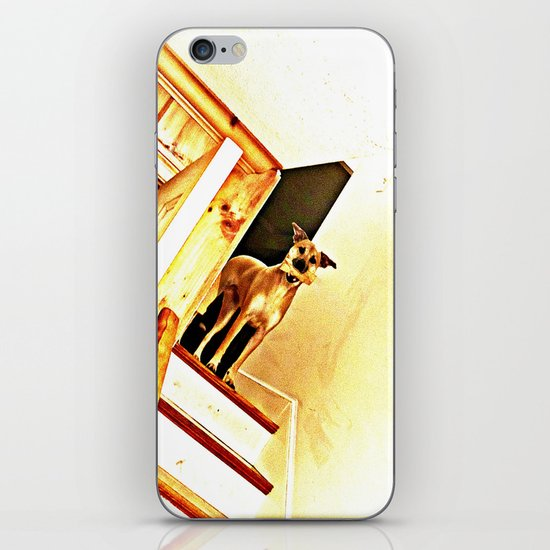Vertigo Dog iPhone & iPod Skin