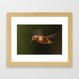 Rufous Framed Art Print