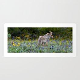 Wild Coyote Art Print