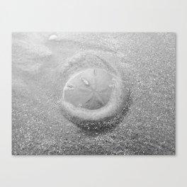 Sand Dollar Canvas Print