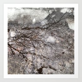 Reflection of Trees in Winter Art Print