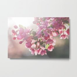 Blossom in Pink Metal Print