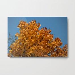 Autumn Colours 2 - Poland Series Metal Print