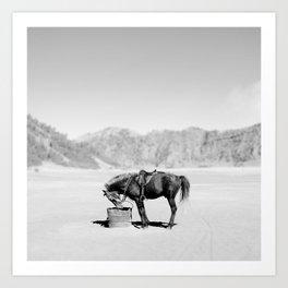 Horse Bromo Art Print