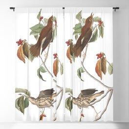 Wood thrush, Birds of America, Audubon Plate 73 Blackout Curtain