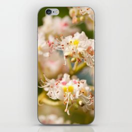 Aesculus chestnut tree blossoms iPhone Skin