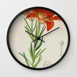 Lilium philadelphicum Vintage Botanical Floral Flower Plant Scientific Wall Clock