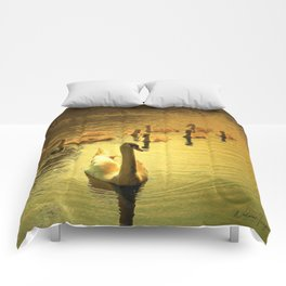 Follow Me Comforters