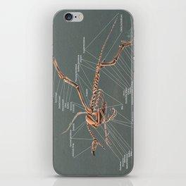 Gryphon Skeleton Anatomy iPhone Skin