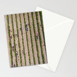 Grape Vine Stationery Cards