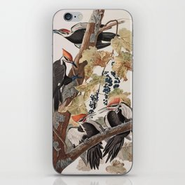 John James Audubon -Woodpecker iPhone Skin