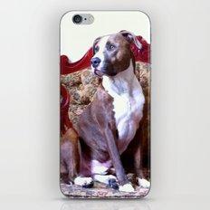 Doggie :) iPhone & iPod Skin