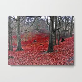 Fall in Denmark forest Metal Print