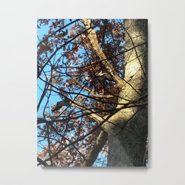 Pileated Woodpecker Amidst the Trees Metal Print