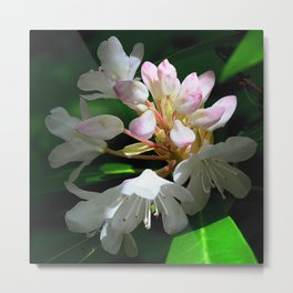 Rhododendrons in Long Island Metal Print