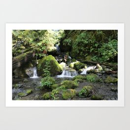 Moss Rocks in the Rainforest Art Print