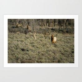 The Bull Elk Art Print
