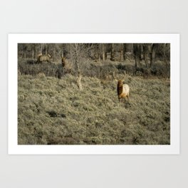 The Bull Elk Art Print