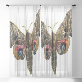 Moth Sheer Curtain