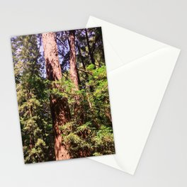 Muir Redwoods Cathedral Grove Stationery Cards
