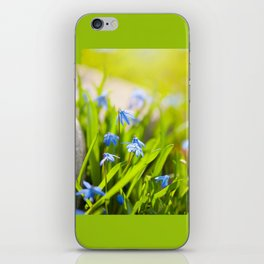 Scilla siberica flowerets named wood squill iPhone Skin