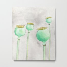 Four Poppy Pods Metal Print