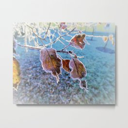 frost and Winterlight Metal Print