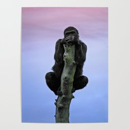 Lope The Gorilla At Sunset Poster